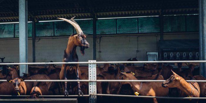 Cucina_aris-fotografie-corso-torino-marco-campeotto-paesaggio-animali-agrifoodie