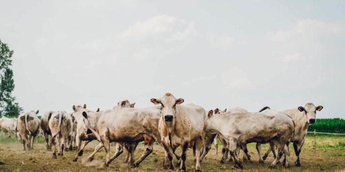 rolle-fotografie-corso-torino-marco-campeotto-paesaggio-animali-agrifoodie_2